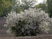 11-xxxxxxxxxx-blom-pa-aker-ma-21-maj-2012